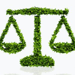 Certificate in Environmental Law (GUC)